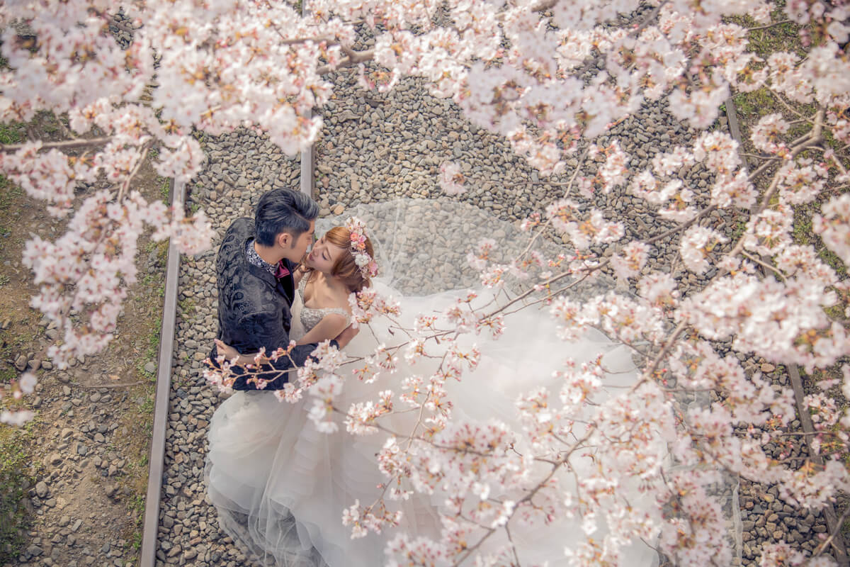 京都櫻花,櫻花婚紗