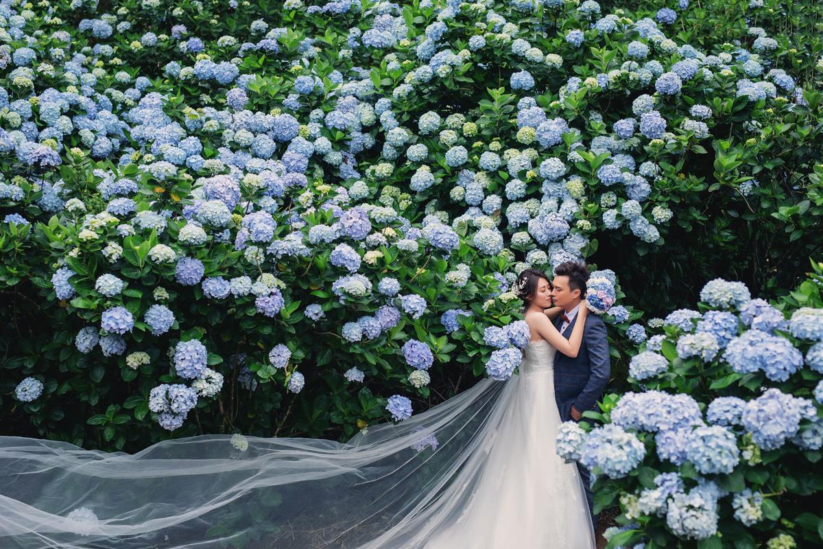 繡球花婚紗,婚紗攝影,陽明山,繡球花季,自助婚紗