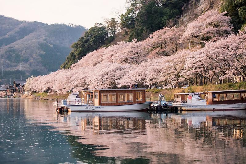 京都婚紗,櫻花婚紗,海津大崎,櫻花季,日本櫻花